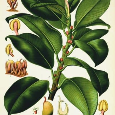 21 Free Botanical Prints