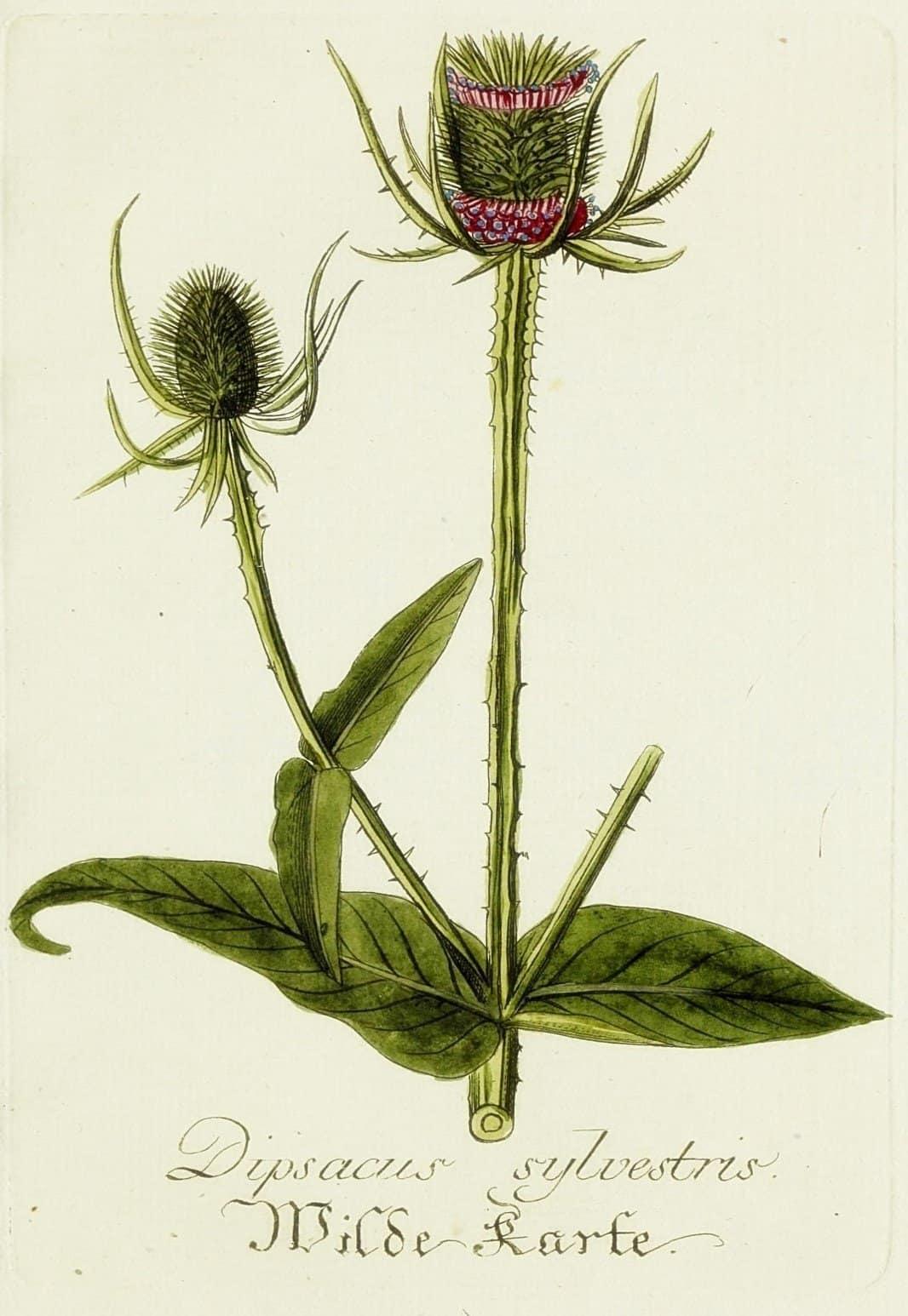 21 Free Lavender Botanical Printables