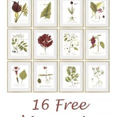16 Free Magenta Botanical Printables